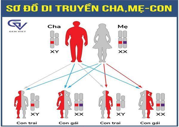 TẠI SAO KẾT QUẢ XÉT NGHIỆM ADN KHÔNG ĐƯỢC KẾT LUẬN CHÍNH XÁC 100%?